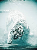 Odin the diving tiger III by Joeykunin