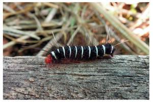 Caterpillar 4 by kiew1