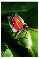 Lychee giant shield bug (nymph) by kiew1