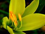 Yellow brightness by ryanwaff