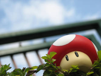 mushroom by russelbear