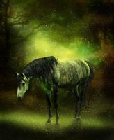 Dapple In Forest by DawnRider7