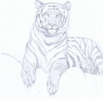 Tiger b/w by rainrivermusic