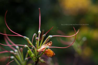 Spring Flower by cryingunderwater