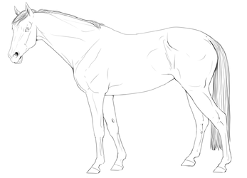 FREE Sport Horse Lineart by IInsomniaI