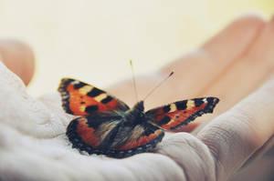 fly little butterfly by Holunder