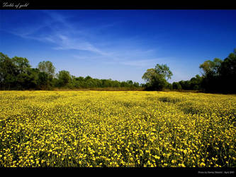 Fields of gold by godislove