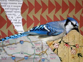 Blue Jay by Jowizz