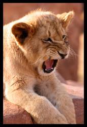 Big Scary King of Africa... by Ubhejane