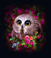 owl by fromNeverlend