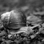 snail pace by liebeSuse