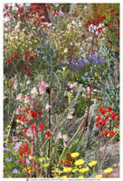 many multi wildflowers by jakwak