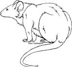 Rat Lineart by AlchemyFox