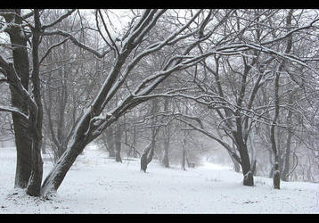 Winter Wonderland 1 by AgiVega