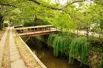 Kyoto Philosopher's Walk by AndySerrano