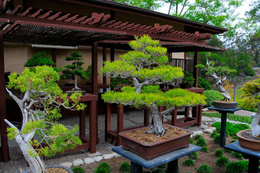 Bonsai Forest by AndySerrano
