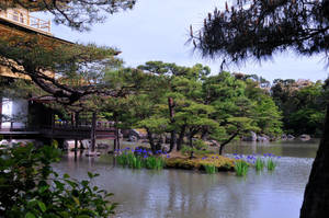 Kinkakuji Golden Pavilion 4 by AndySerrano