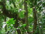Daintree Rainforest 1 by AndySerrano
