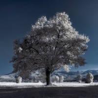 tree by jurcic