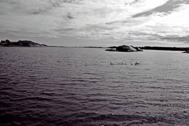 ducks by EliSsHka