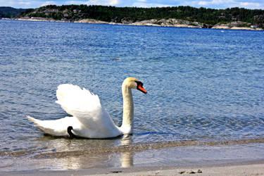 swan by EliSsHka