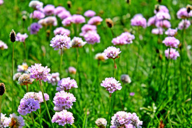 flower by EliSsHka
