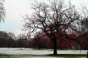 London's-tree by eloisekolodziejski