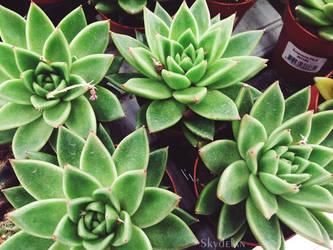 Adorable plants by Skydelan