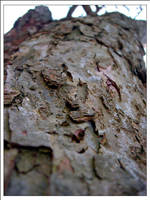 tree up by juntao