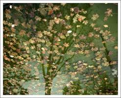 water leaves tree by juntao
