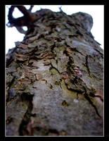 tree texture by juntao