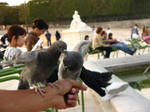 Jardin des Tuileries - part 3 by dpaulo