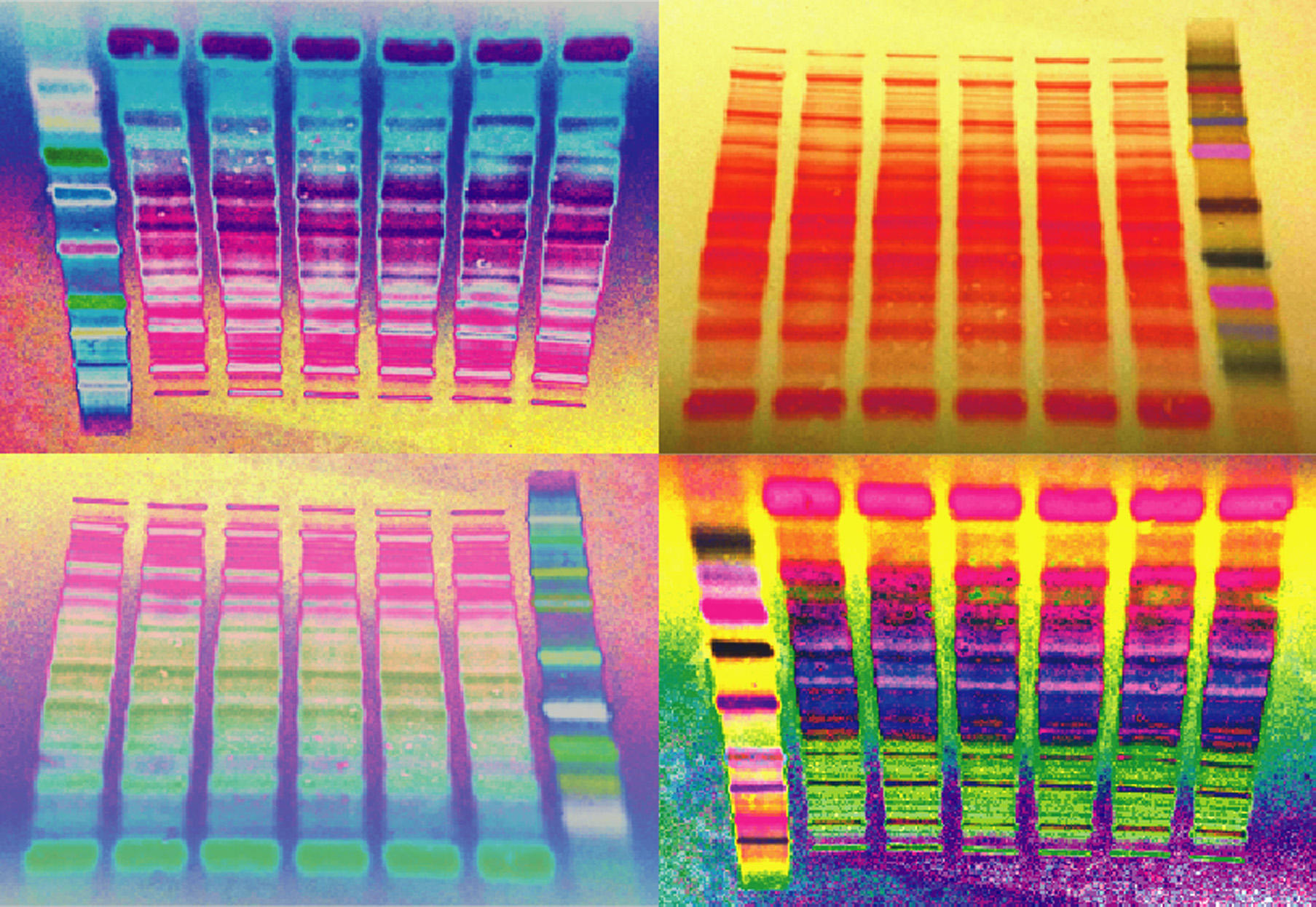 The New Western Blot by sciencemeetsart