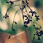 Spring by anna-earwen