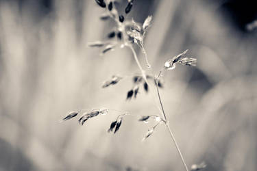 Of long grasses by anna-earwen