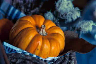 The colours of Samhain by anna-earwen
