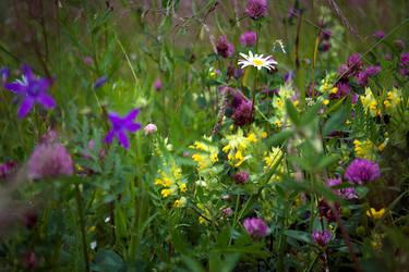 Flower Power by anna-earwen