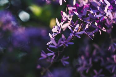 Midsummer blues by anna-earwen