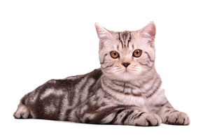 png cat by eross-666
