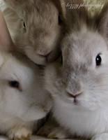 Bunnies by lozzzy