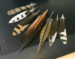 Like coloured daggers by Sharkbirb