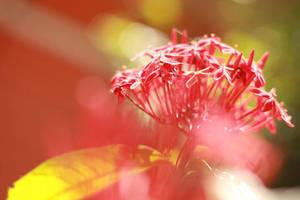 Florae by Malakingkathangisip