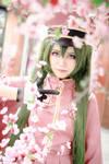 1000 Sakura [III] by AsumiChan