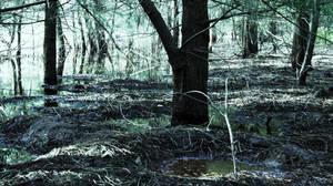 Swamps II by elaporterPhoto