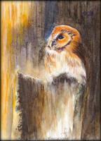 Card5 Owlett by EarlyOctober