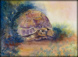 Card10 Turtle by EarlyOctober