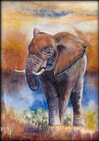 Card11 Elephant by EarlyOctober