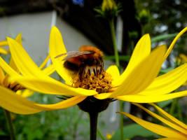 Bumblebee by MissLumikki