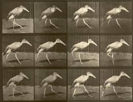 walking crane by animation-stock