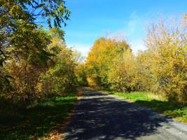Summer Drive by Schvenn